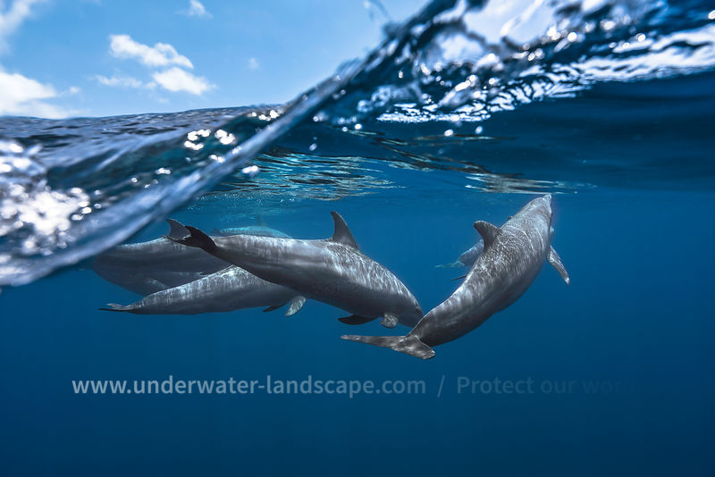 Photo sous marine - Dauphins à la surface