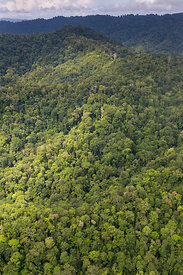 Aerial view of primary lowland tropical rainforest, Osa Peninsula, Costa Rica