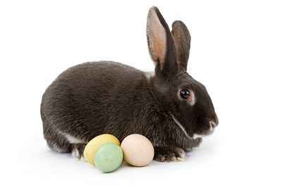 A Rabbit Isolated on White with Easter Eggs