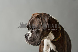 side profile of boxer