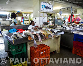 Mercado de Marisco | Paul Ottaviano Photography