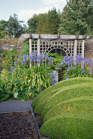 Wave-shaped topiary, agapanthus and arbour