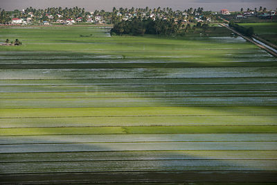 Aerial view of rice crop production in coastal area of Guyana, South America