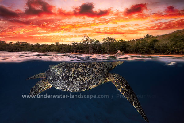 Green sea turtle and fire sky!
