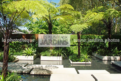 Aquatic garden, Contemporary garden, Exotic garden, Tropical garden, Water garden, Tree Fern