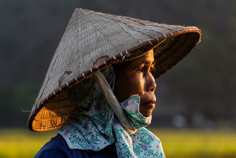 Portrait of a Vietnamese Rice Worker