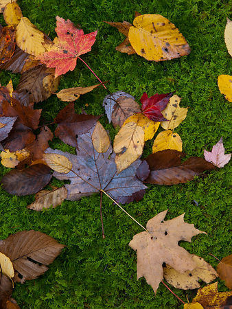 Leaves on Moss