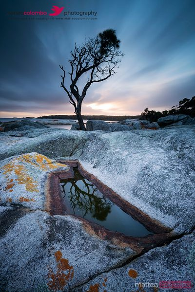 Single tree at sunrise reflected in water pool Tasmania Australia