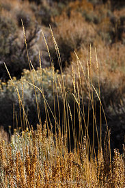 Remains of Grasses