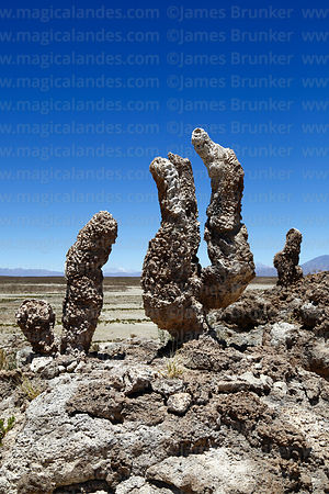 Fossilised tubes of algae and sediments on shore of Salar de Uyuni at Aguaquiza, Nor Lipez Province, Potosí Department, Bolivia