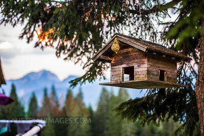 Austria, Gosau, bird house in tree