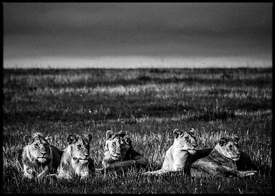 7751-Lions_family_in_the_wild_Laurent_Baheux_