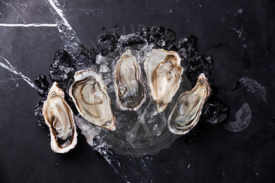 Opened Oysters on dark marble background with ice