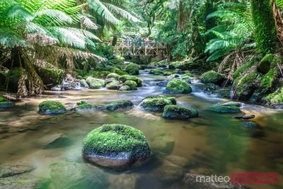 Creek in the tasmanian rainforest Australia