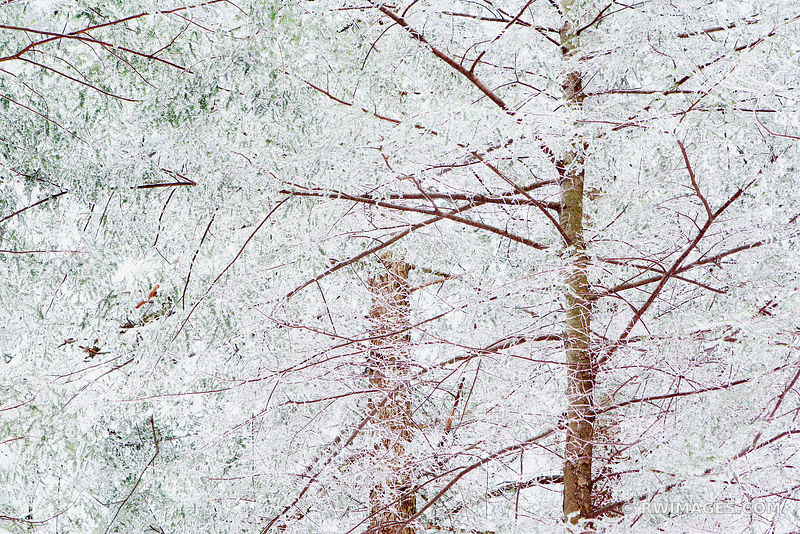 WINTER TOCCATA NATURE ABSTRACT SMOKY MOUNTAINS NORTH CAROLINA