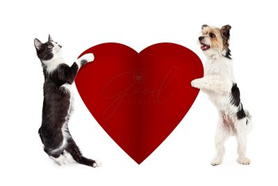 Cat and Dog Holding Blank Valentine Heart