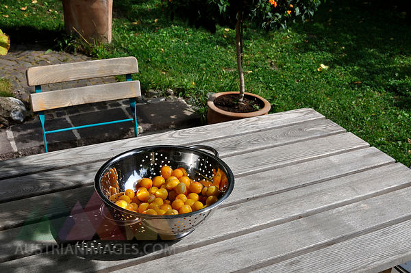 Germany, Baden Wuerttemberg, Yellow plums in colander on wooden table