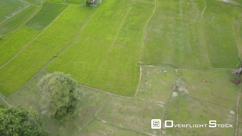 Aerial view of rice paddies at Don Det Island, one of the 4000 islands, filmed by drone, Laos