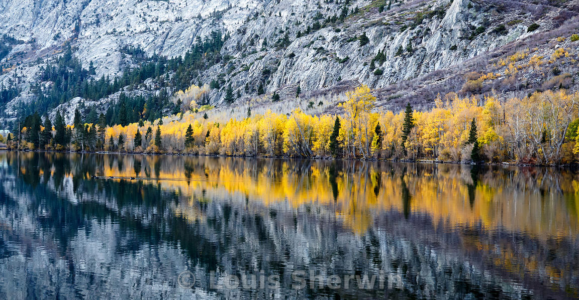 Aspens on the shore of Silver Lake.