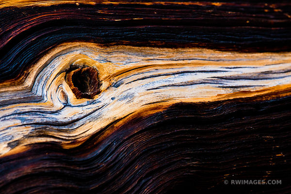 NATURE ABSTRACT CHARRED BRISTLECONE PINE MOUNT GOLIATH NATURAL AREA ARAPAHO ROOSEVELT NATIONAL FOREST COLOR