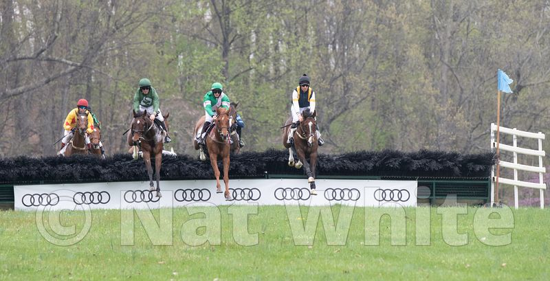 National_Fence_Jump-Oatlands-10_April_14_2019_NAT_WHITE