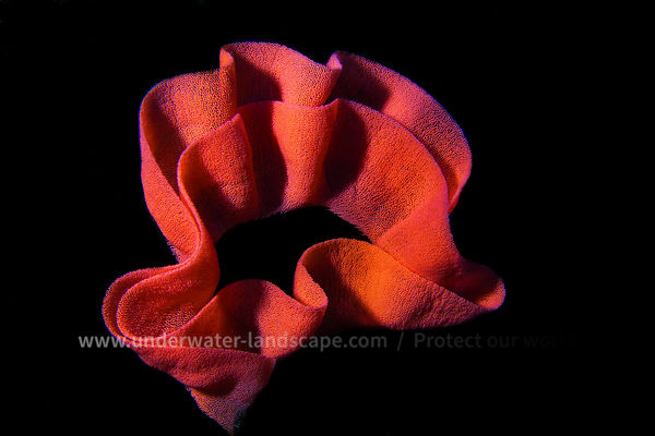 Underwater red Flower
