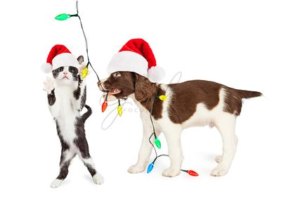 Christmas Puppy and Kitten Playing With Lights