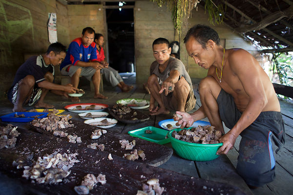 Equal sharing among the clan families of the meat of a wild pig hunted the day before with a spear, Pulau Siberut, Sumatra, I...
