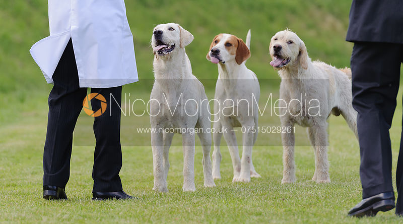 Cottesmore Hunt Puppy Show 2014