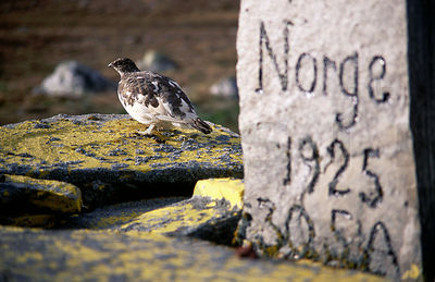 The Ptarmigan on the Border Mark Between Finland And Norway