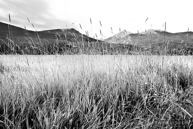 HGH GRASS MEADOW COYOTE VALLEY TRAIL KAWUNEECHE VALLEY ROCKY MOUNTAIN NATIONAL PARK COLORADO BLACK AND WHITE