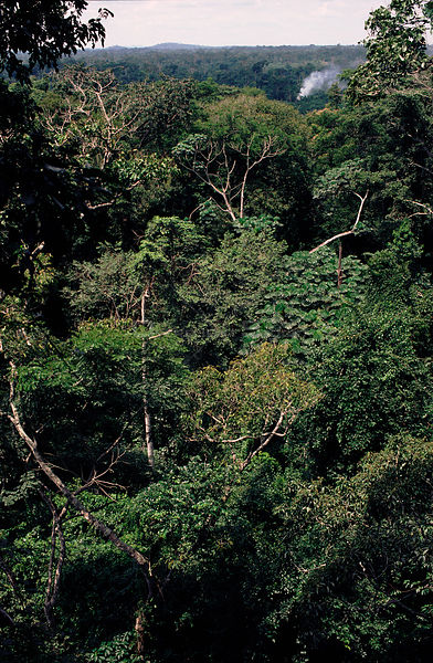 View over rainforest canopy, Epulu Ituri Reserve. Republic of Congo