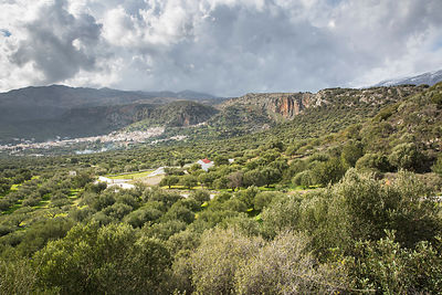 Oliveraie et village de Kritsa, Crète, Grèce / Olive grove and village of Kritsa, Crete, Greece