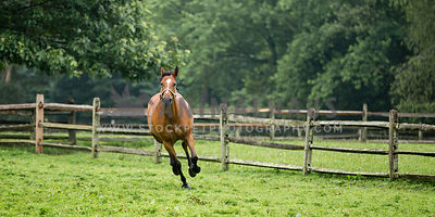 horse galloping in pasture