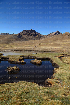 Small lake in puna grassland and Cerro Tunari peak, Tunari National Park, Bolivia