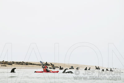 Kayak and seal colony