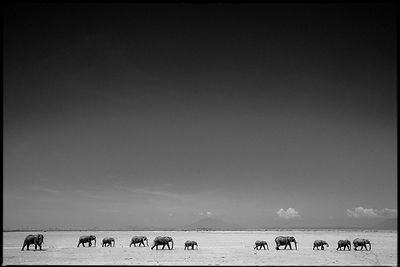9898-Elephants_walking_in_the_vast_plain_Laurent_Baheux