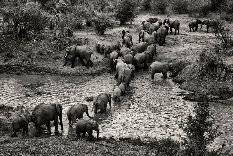 Elephants Congregating at a Waterhole