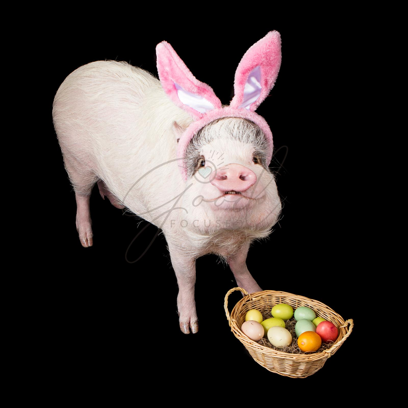 Funny Pig Easter Bunny With Basket