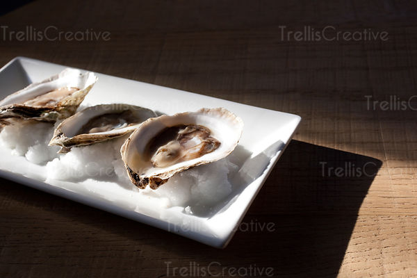 Oysters with Harsh Shadows