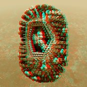 Anaglyph of Influenza virus cutaway showing internal structure #1