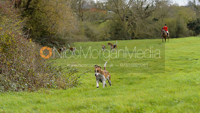 John Holliday and the Belvoir hounds in Long Clawson