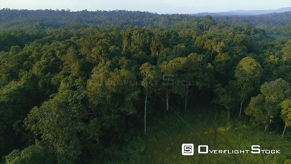 Drone Video of Game Trails Khao Yai National Park Jungle Wilderness Thailand. Forest Edge.