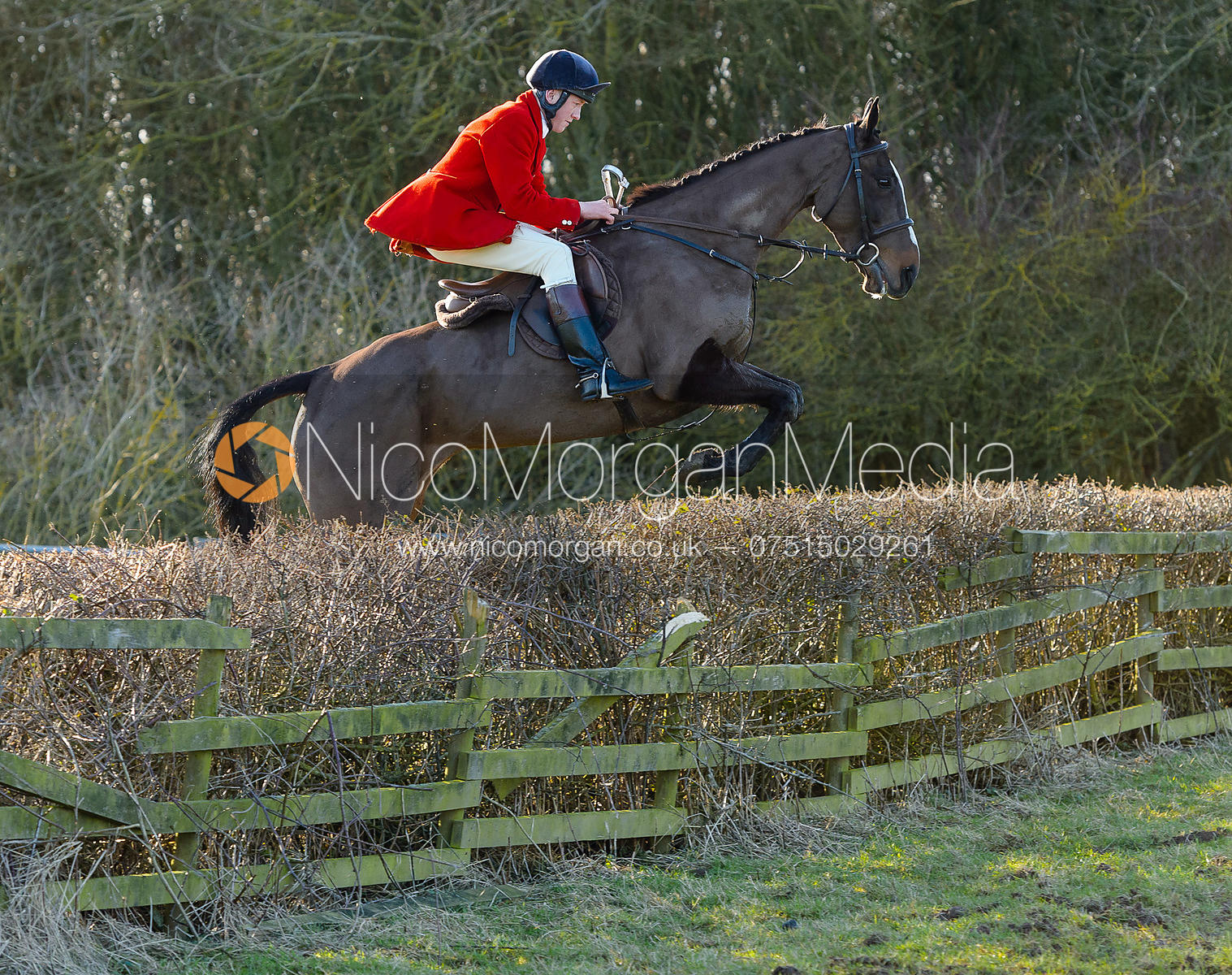 Hartley Crouch jumping a hedge at Town Park Farm - The Cottesmore at Town Park Farm