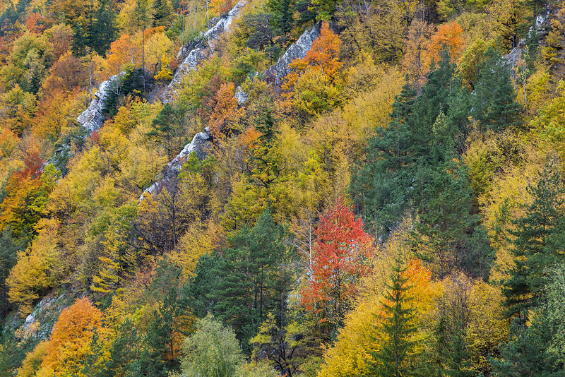 Autumn Hues in the Bicaz Gorge