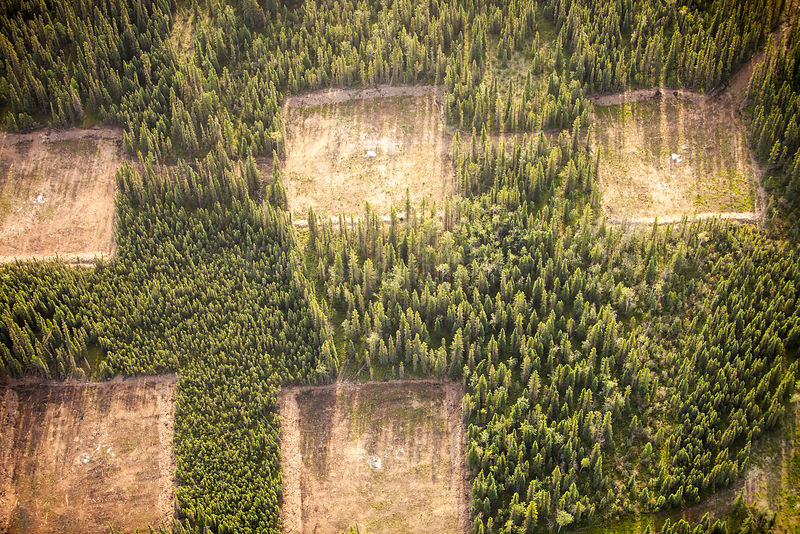 Boreal forest trees clear felled to make way for a new tar sands mine north of Fort McMurray, Alberta, Canada. The tar sands ...