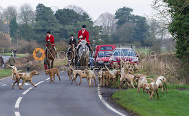 The Cottesmore hounds led by Huntsman Andrew Osborne MFH