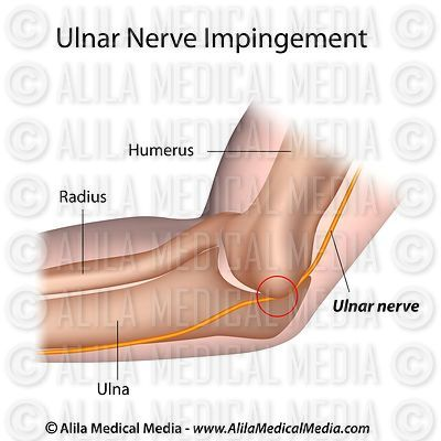 Anatomia do nervo ulnar
