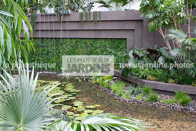 Contemporary garden, Exotic garden, Palm tree, Tropical garden, Water garden, Foliage wall, Green wall, Vegetation wall