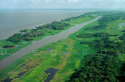 Lower Amazon floodplain with exposed grasslands at low water level. Brazil
